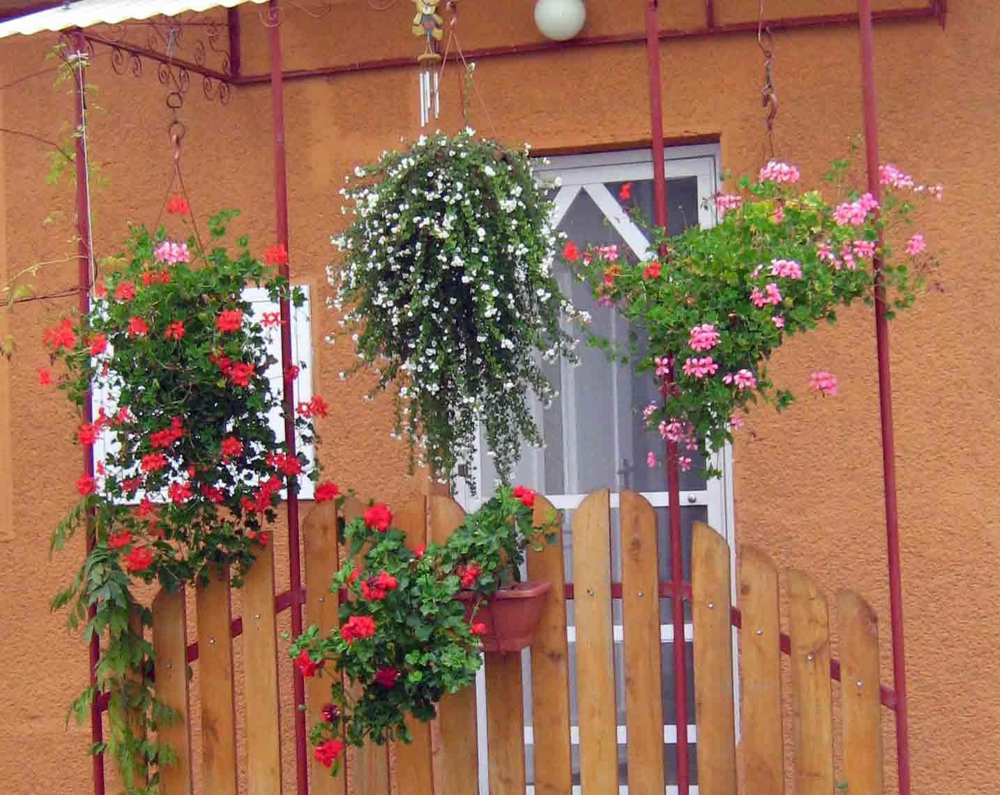 Csenger- tesóm virágai