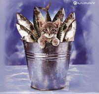 Kismacska a halak közt