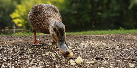 James Cage: Nem illik nézni, ahogy eszem...