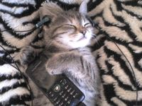walkman cica módra