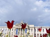 szeged múzeum tulipánok