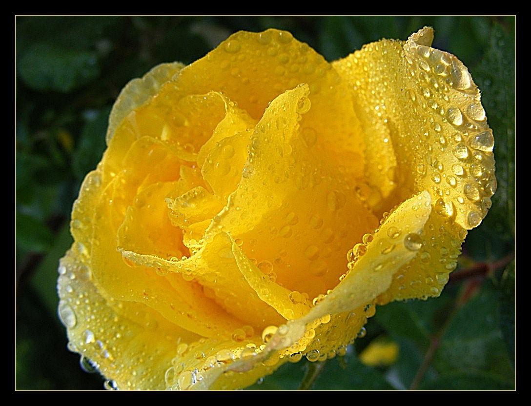 díszítő eső (2)