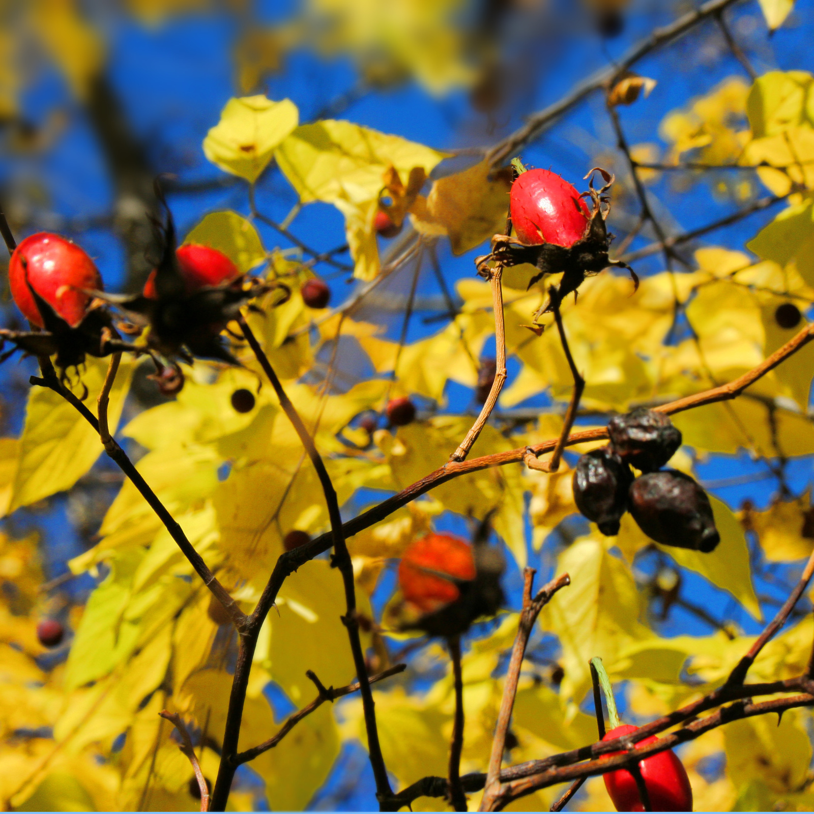 Az ősz színei No 003