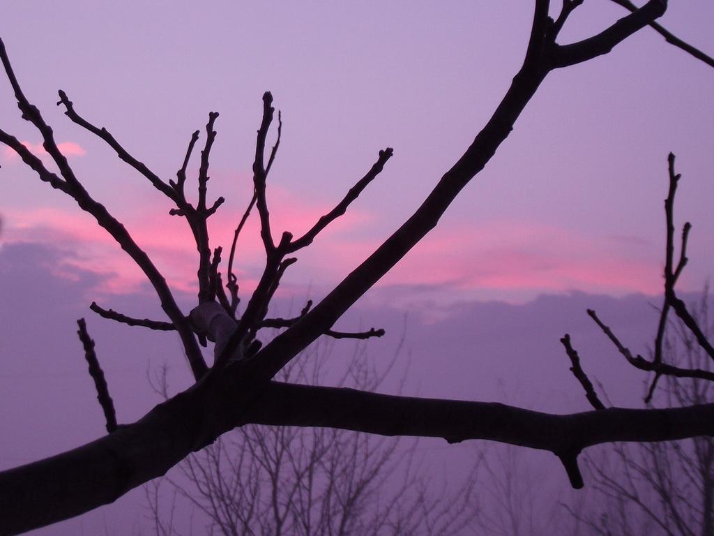 Rózsaszínű reggel