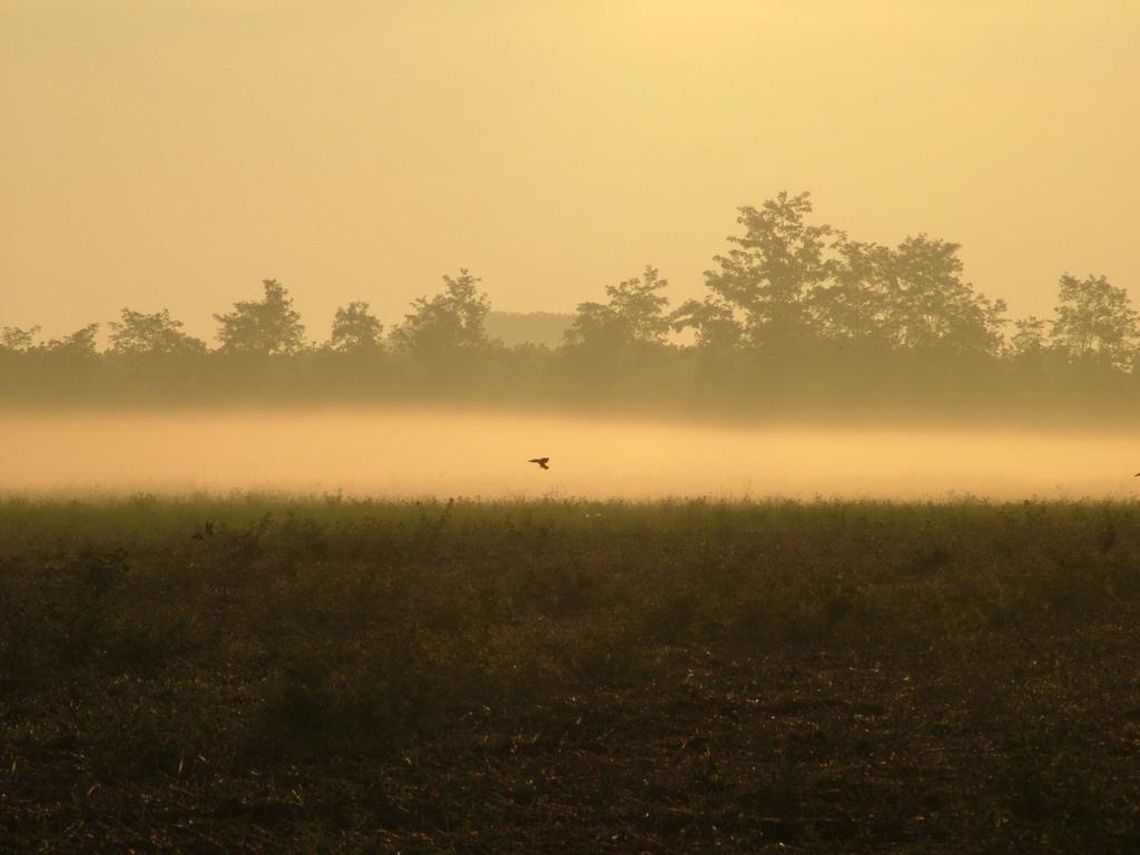Nyári köd