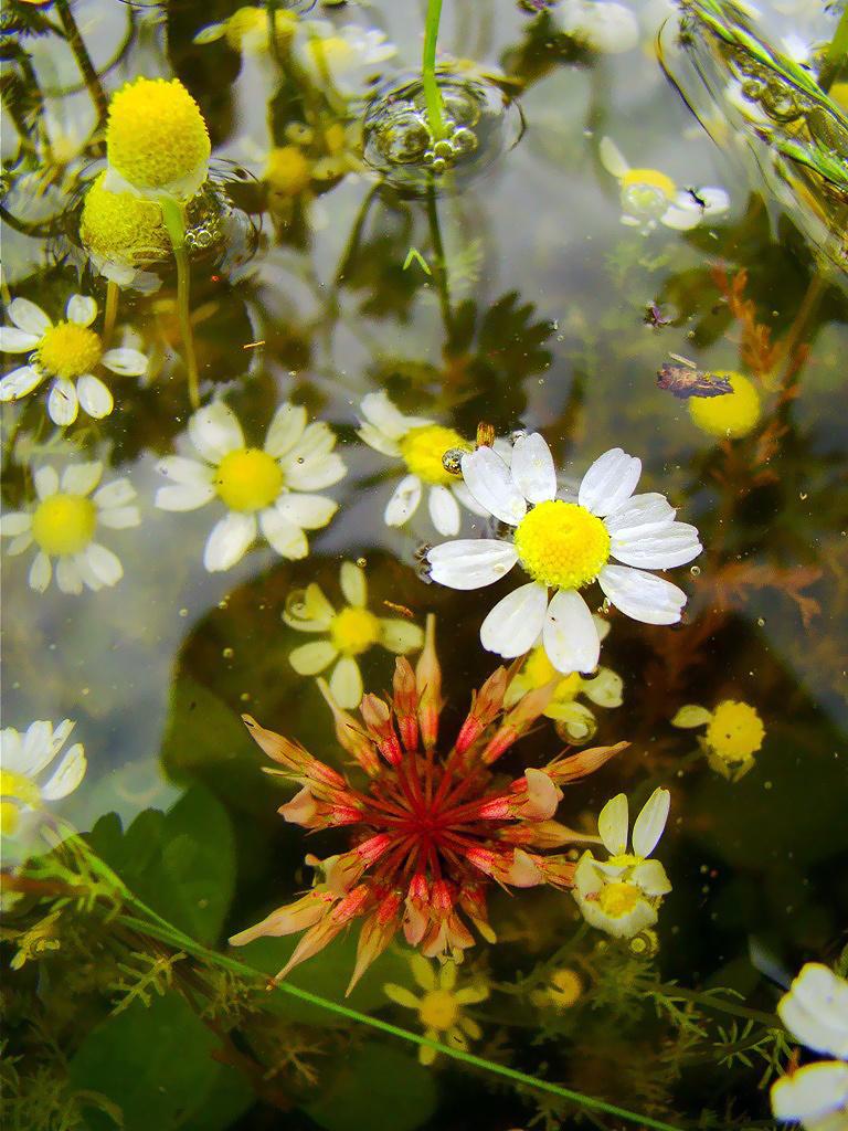 Árvizi virágcsokor