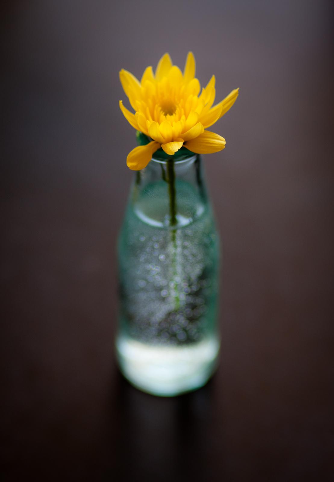 Virág üvegben 1