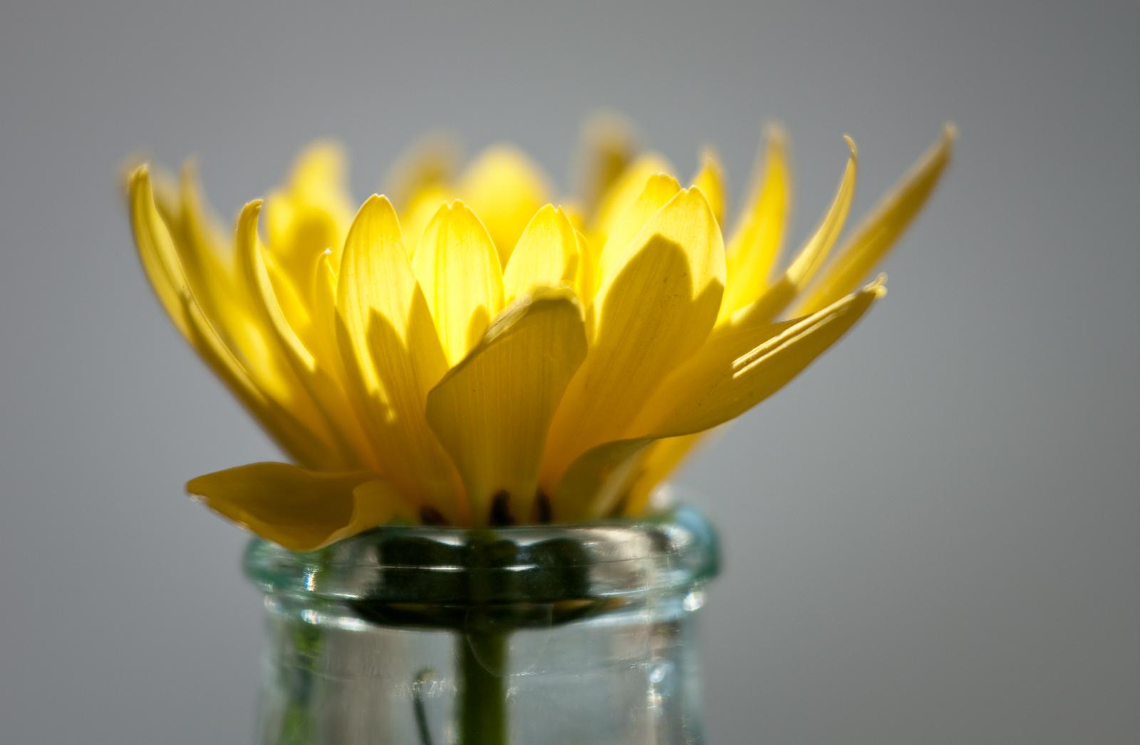 Virág üvegben 3