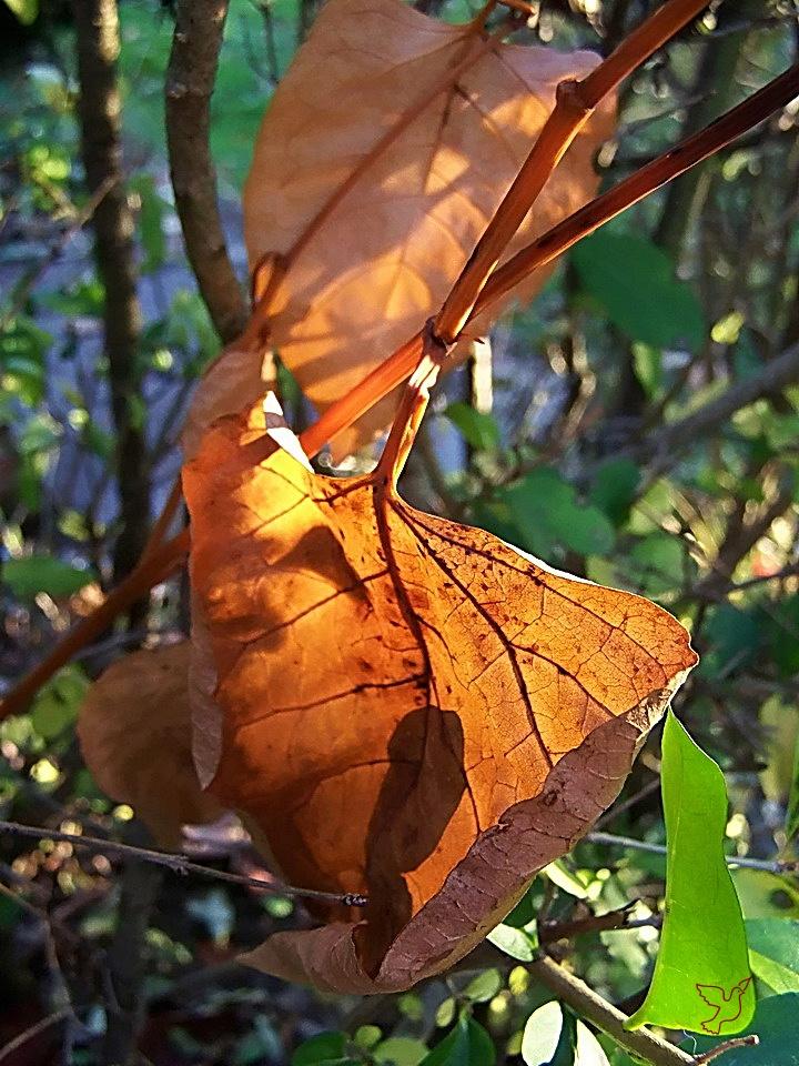 őszi színek, őszi levél